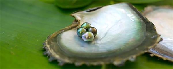 Cooköarnas svarta pärlor med i Liza Marklunds nya roman